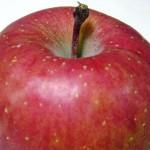 妊婦は要注意!胎児に悪影響を及ぼすリンゴ病