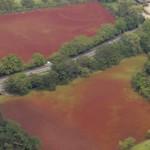 奈良公園の池が真っ赤に 水草が大量発生
