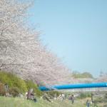 日本各地の桜の名所 おすすめスポットをご紹介