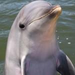 小笠原諸島にイルカの季節到来 一緒に泳げるツアー一覧
