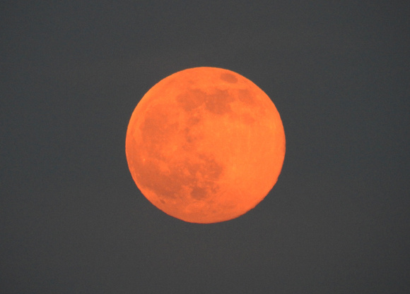 strawberrymoon1